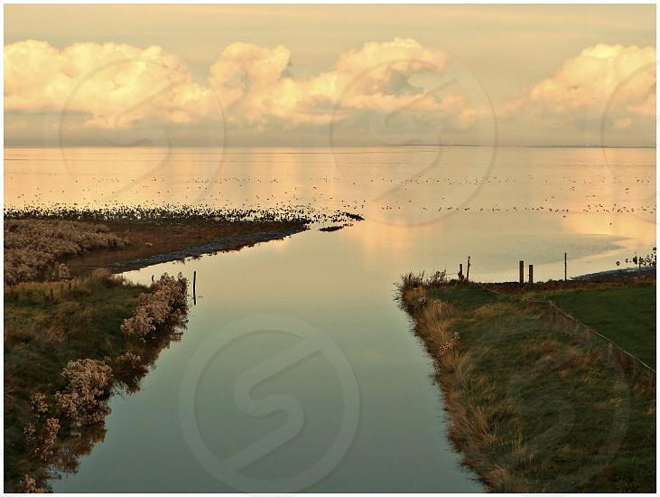 Swarte Hanen..Friesland photo