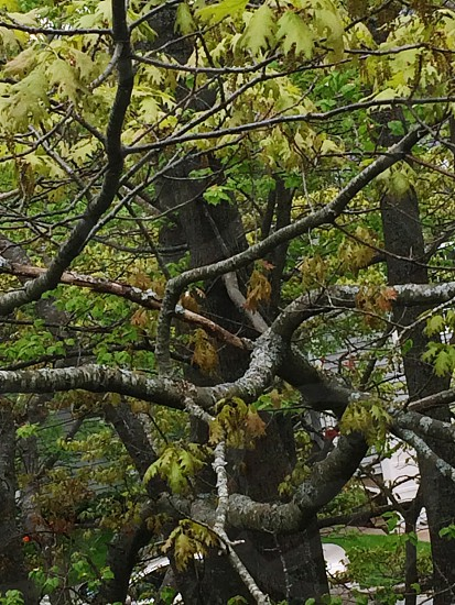 Treebranchesleaves photo