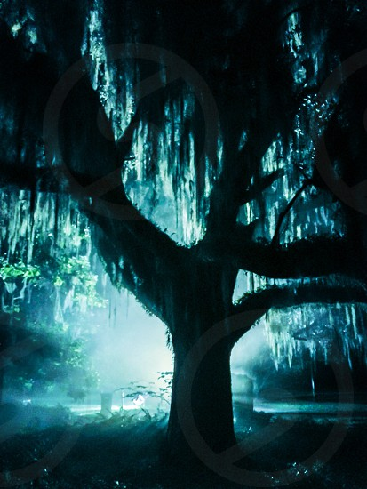 Tree light eerie spooky night oak Halloween mist smoky photo