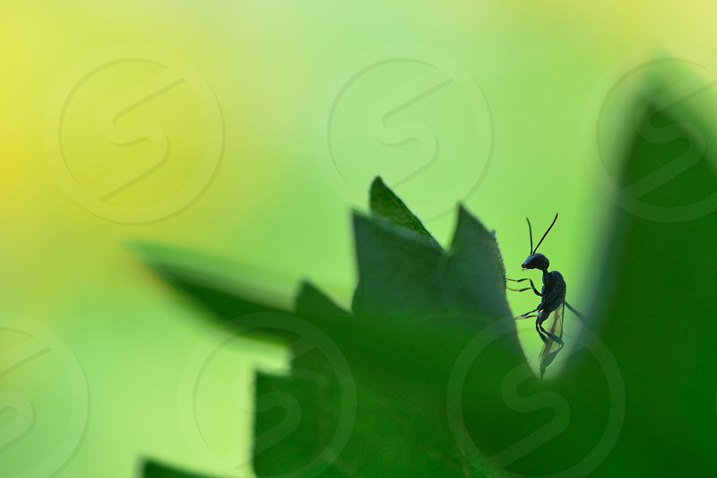 animal antenna background bee black body bug close close-up creature detail diminutive insect invertebrate legs limbs macro makro natural nature pest scary small sting wasp wing wings photo