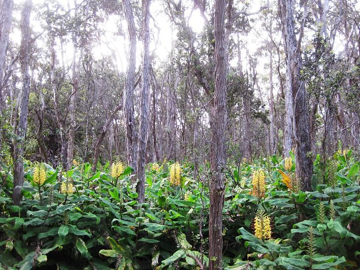 rainforest scenery  photo