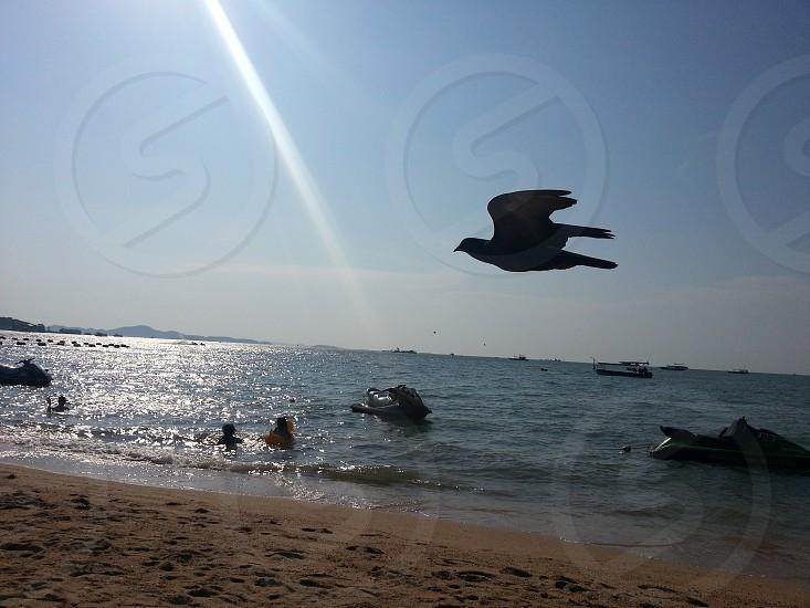 Seagull flying at dusk in Pattaya beach Thailand photo