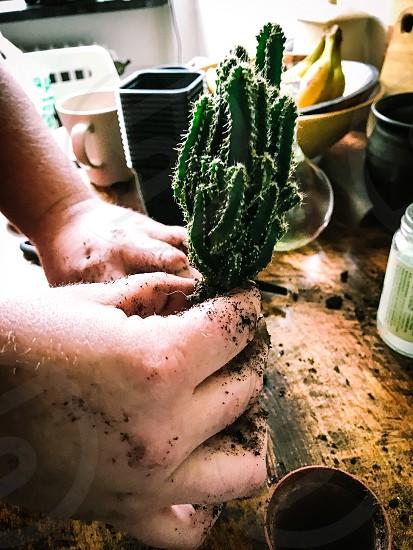 Creative planting  cactus green hands soil  photo