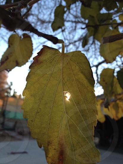green tree leaf photo