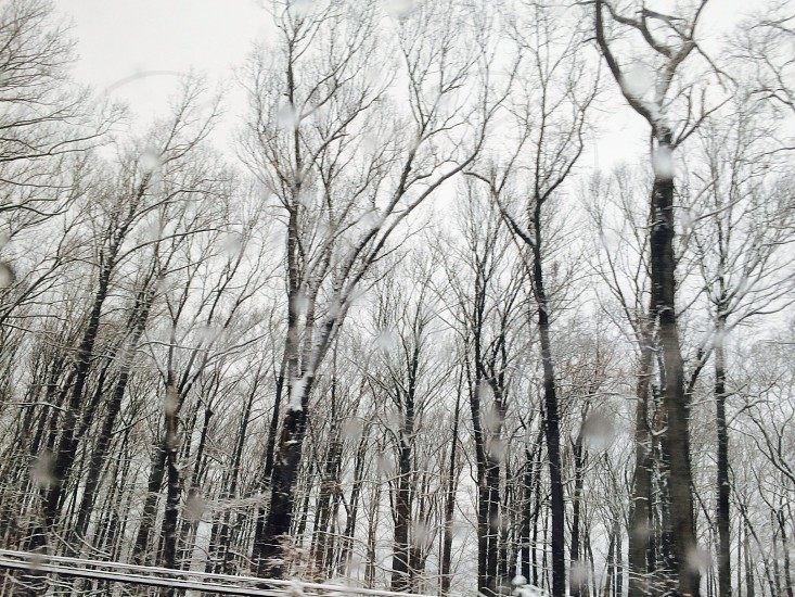 leafless trees covered in snow photo photo