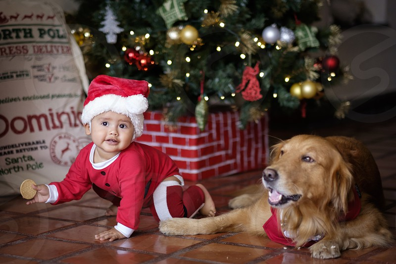 Cute baby child in Christmas elf costume crawling next to Golden Retriever family dog at the Christmas tree photo