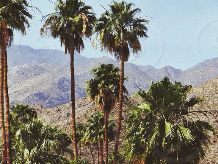 green palm trees and mountain photo