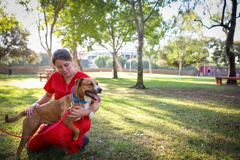woman wearing red saree dress holding the tan and white American pit bull terrier photo