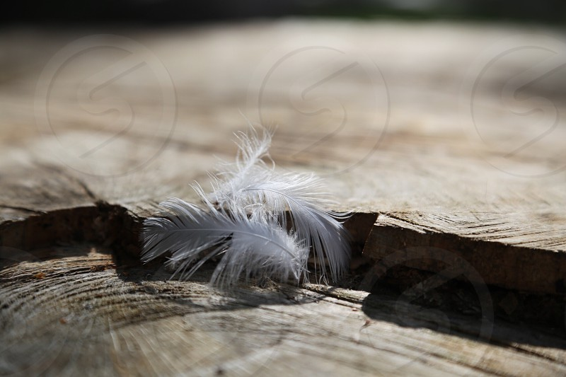 Hard and soft- feather and wood photo