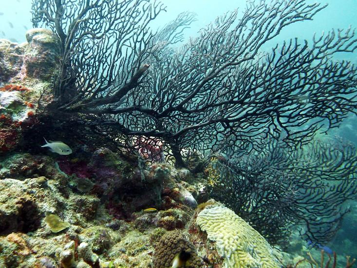 West Indies diving photo
