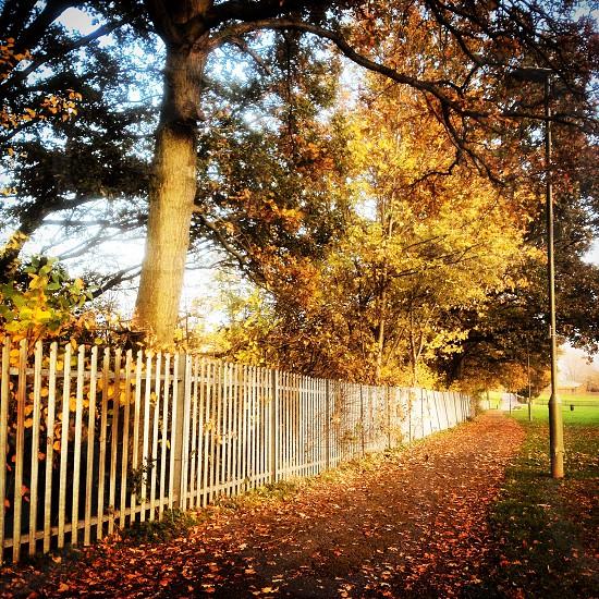 Autumn Red Carpet photo