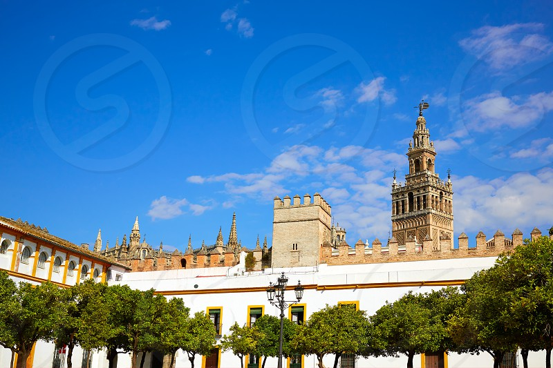 Seville Giralda tower of Sevilla from Alcazar Andalusia Spain photo