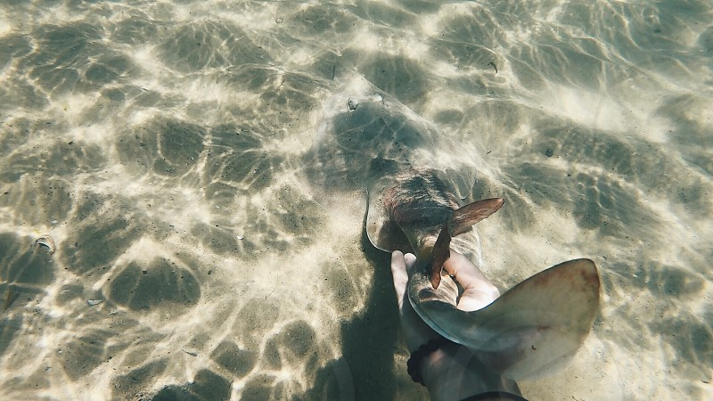 Swim underwater chill be surrender summer light sunlight nature natural lights reflections ocean sea water peaceful fish love photo