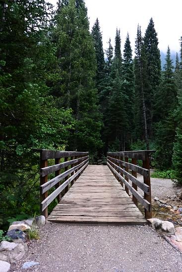 brown wooden plank bridge on water photo