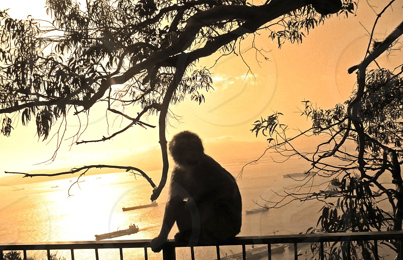 monkey sitting on a fence with boats sailing in the ocean background photo