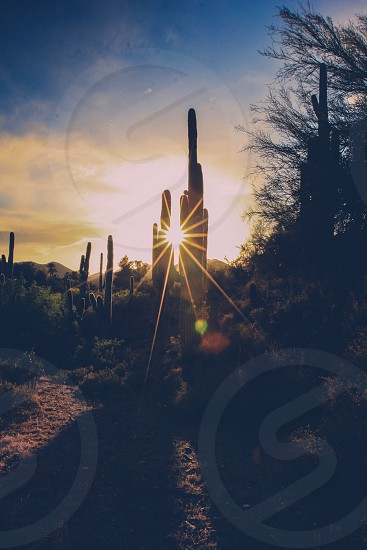Arizona desert camping sunrise through the cactus. photo