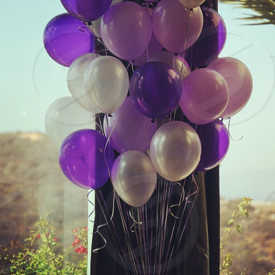 Purple balloons  photo