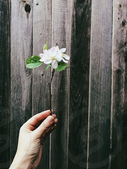 white flower plant with wooden background photo