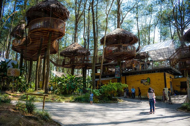 Kopeng Tree top Adventure Park photo