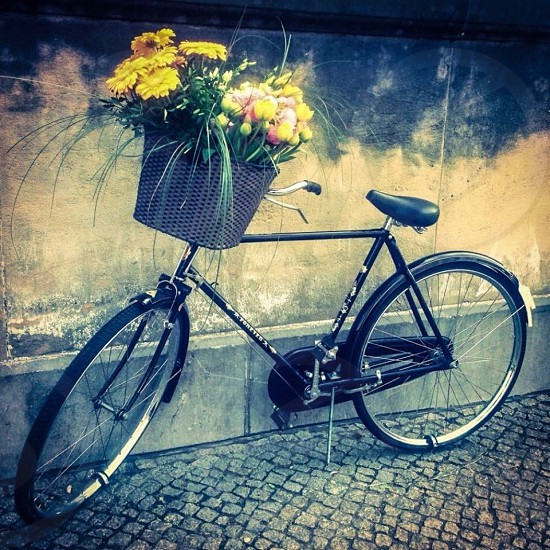 Outdoor day square colour pretty boho bohemian bike bicycle basket flower flowers bunch Spring Berlin Germany Europe photo