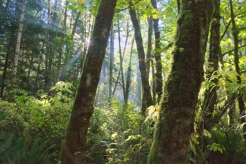 Quiet Northwest rainforest. photo