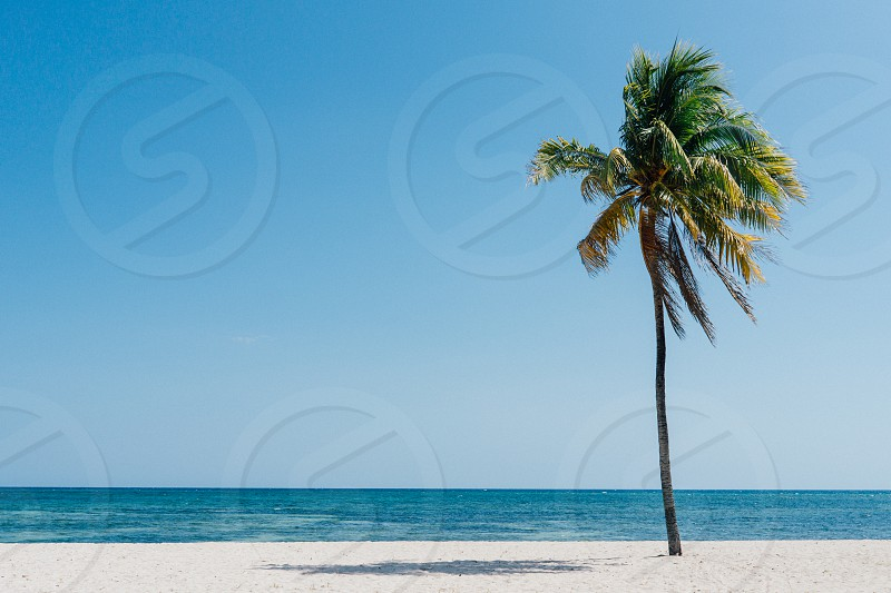 tropics tropical palm tree palm beach ocean sea sun summer photo