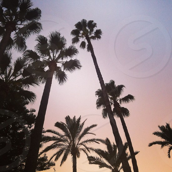 palm trees Andalucia Spain sunset photo