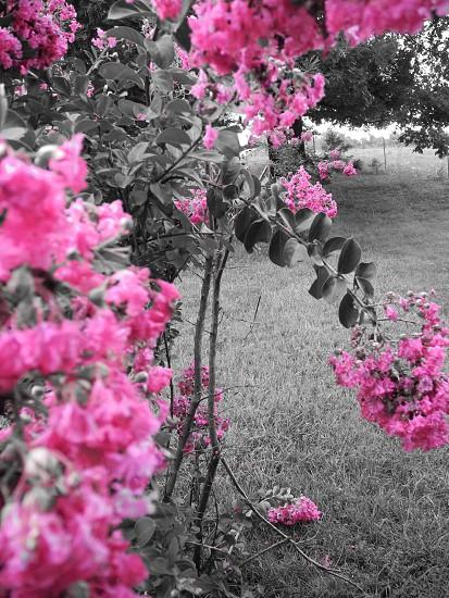pink flowering plant photo