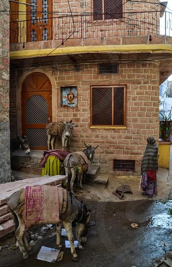 Donkey Herder in Jaipur India photo