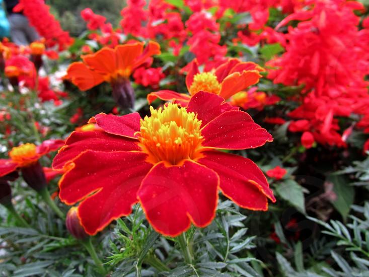 Flowerscolorscolor stream photo