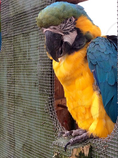 Close up of parrot photo