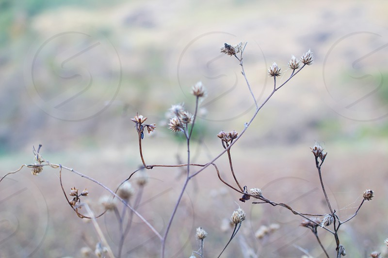 dried plants photo