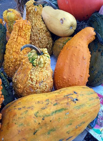 Gourds photo