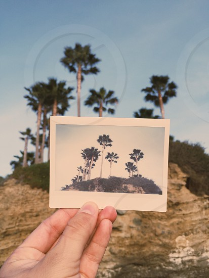 person holding palm trees photo photo