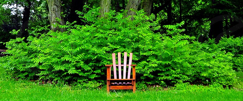 brown wooden Adirondack chair on green ground photo