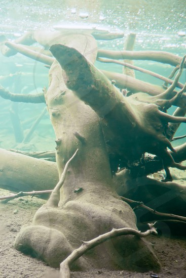 Underwater shot in frozen beaver pond with sunken wood and underside of thick layer of ice photo