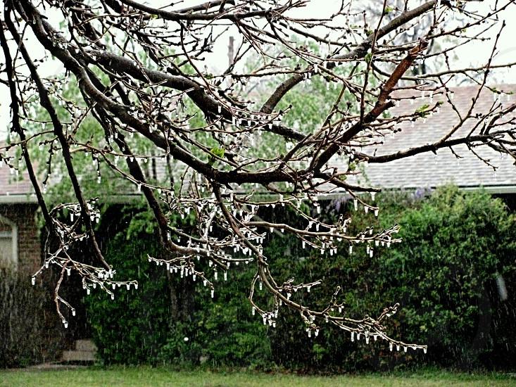 Nature Winter Ice and Tree. photo