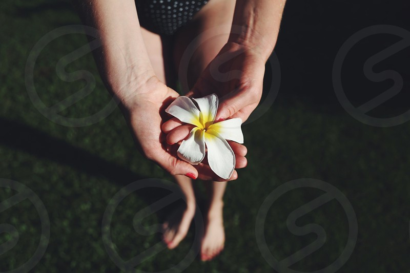 human hands holding white and yellow flower photo