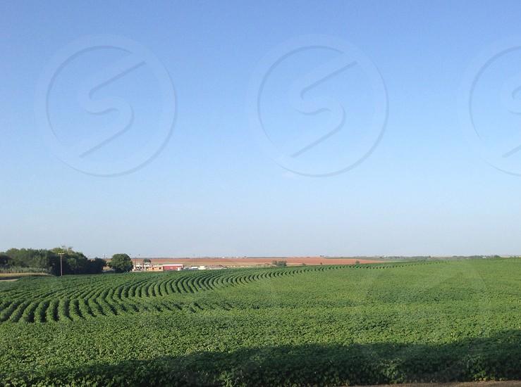 green fields view photo