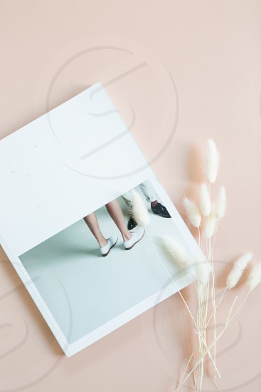 White dried bunny tail grass and magazine on pink background copy space photo