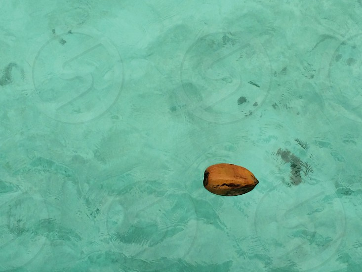 Coconut floating on shallow water photo