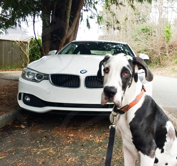 Twins. Road trip with the pup in the Bimmer.  photo