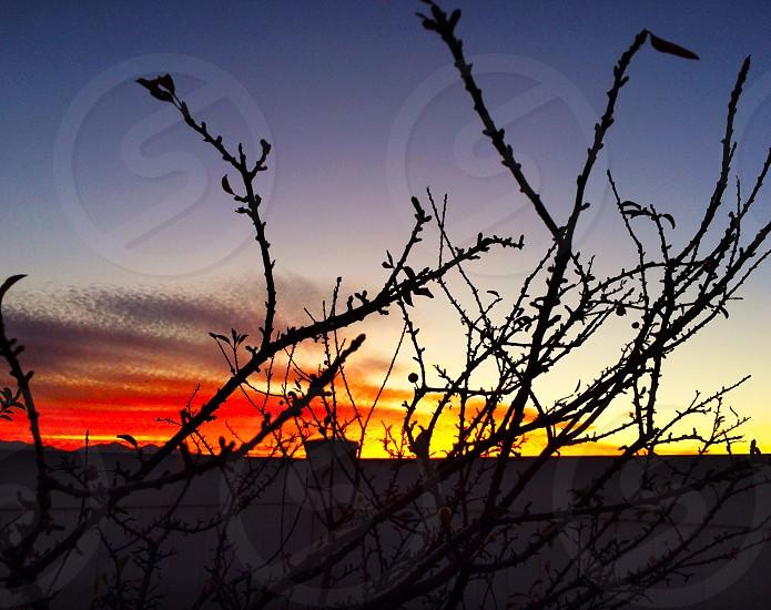 Sunset orange Salt Lake City sticks bushes  photo