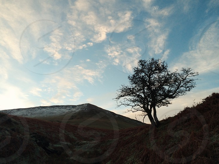 Lone tree in the mountains of Wales photo