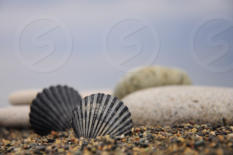 black scalloped shells on brown sandy shore with white rocks under blue sky photo