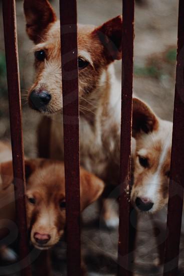 three cute dogs photo