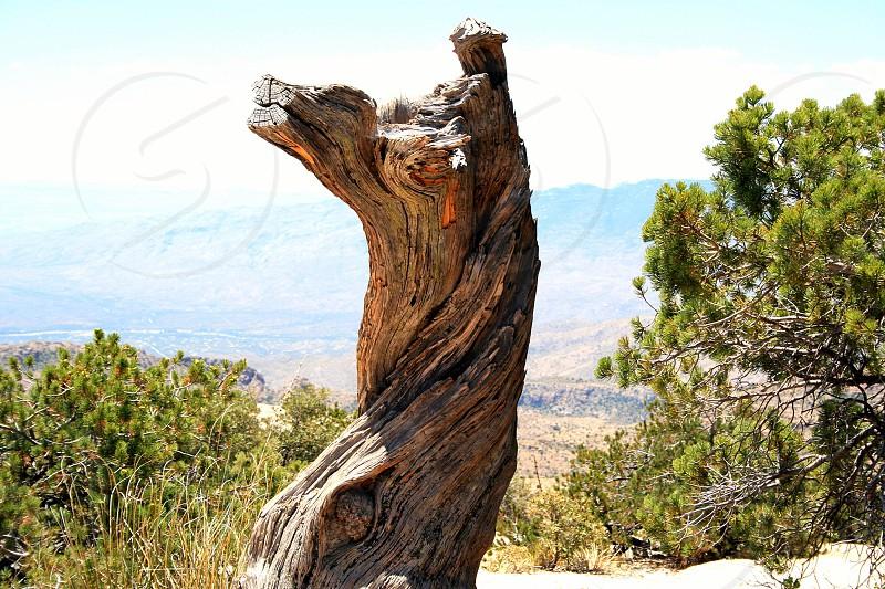 brown driftwood photo