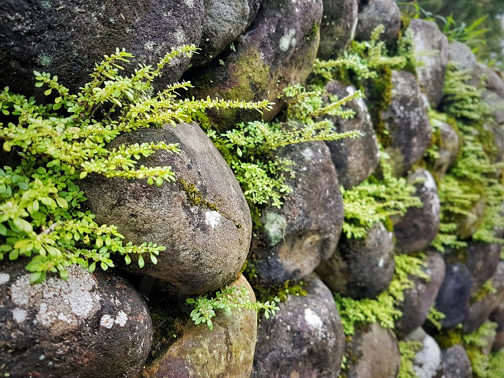 moss and stones photo