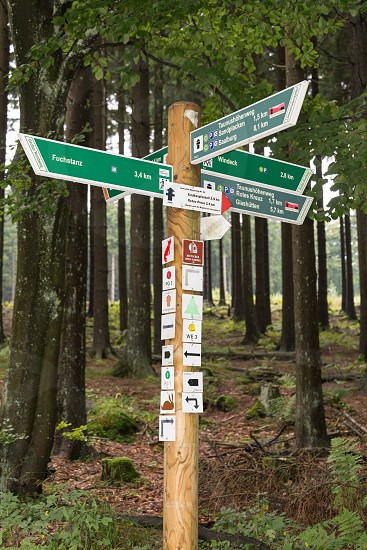 forest Forrest woods walk nature trail walk sign signs nature trail signs signpost nature trail forest walk forestry sign trees photo