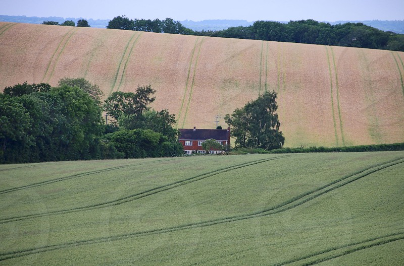 green fields with the other is unplanted photo